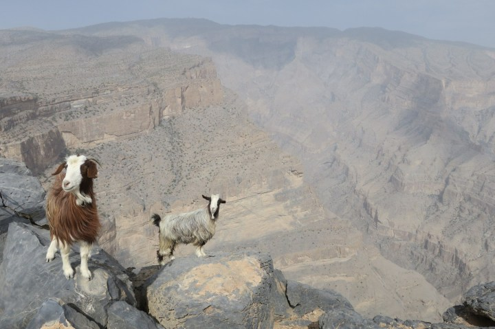 Jebel Shams tour from muscat