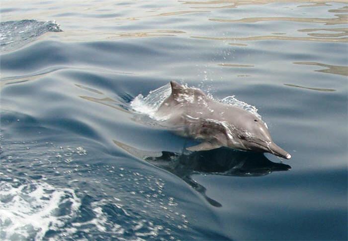 Musandam Oman dolphin watching